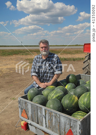 Farmer and watermelons at trailer, farmers market 41350092