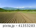 畑 キャベツ 初夏の写真 41353283