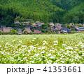 蕎麦の花と美山かやぶきの里 41353661