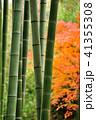 竹 秋 竹林の写真 41355308