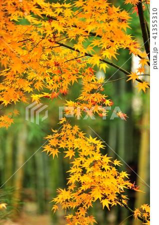 黄葉と竹 41355310