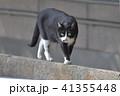 塀を歩く白黒猫 41355448