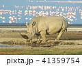シロサイとコフラミンゴ(ケニア) 41359754
