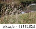 日本 ジャパン 日本国 41361628
