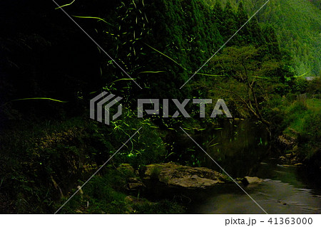 奈良の蛍:非合成写真(御杖村) 41363000