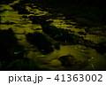 蛍 ゲンジボタル 川の写真 41363002