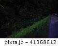 蛍 夜 光の写真 41368612