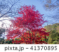 秋 樹木 木の写真 41370895