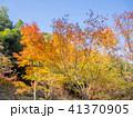 秋 樹木 木の写真 41370905