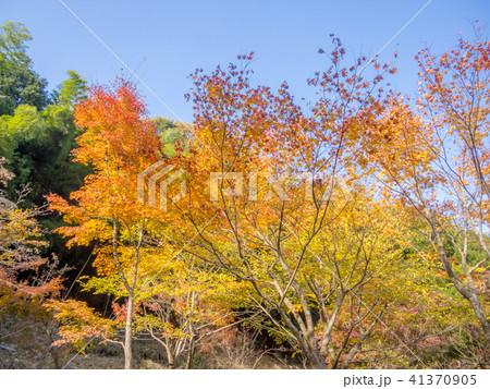 【伊豆】秋の修禅寺奥の院【日本庭園・紅葉】 41370905