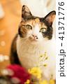 三毛猫モデル 41371776