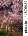 桜 夜 夜桜の写真 41376982