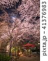 桜 夜 夜桜の写真 41376983