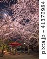 桜 夜 夜桜の写真 41376984