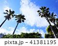 椰子の木 青空 雲の写真 41381195