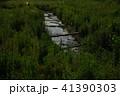 ホタル 鈴鹿ホタルの里 ゲンジボタルの写真 41390303