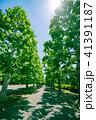 新緑 植物 葉の写真 41391187