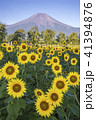 ひまわり畑 花の都公園 富士山の写真 41394876