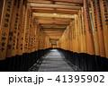 伏見稲荷 千本大社 41395902
