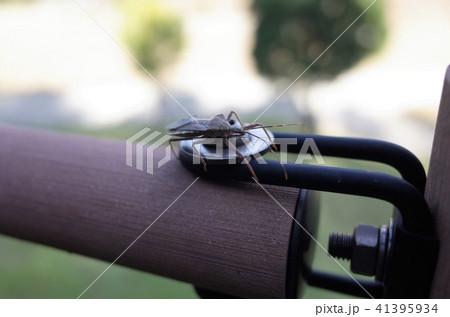 公園の手すりにとまった小さな虫 41395934