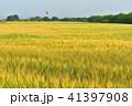 麦畑 麦秋 朝の写真 41397908