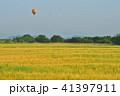 麦畑 麦秋 朝の写真 41397911