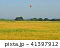 麦畑 麦秋 朝の写真 41397912