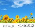 青空 空 向日葵の写真 41401512
