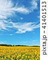 青空 空 向日葵の写真 41401513