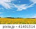 青空 空 向日葵の写真 41401514