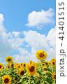 青空 空 向日葵の写真 41401515