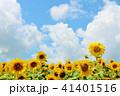 青空 空 向日葵の写真 41401516