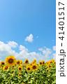 青空 空 向日葵の写真 41401517