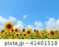青空 空 向日葵の写真 41401518