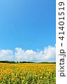 青空 空 向日葵の写真 41401519