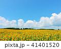 青空 空 向日葵の写真 41401520