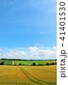 空 畑 麦畑の写真 41401530