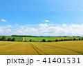 空 畑 麦畑の写真 41401531