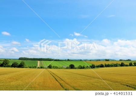 北海道 青空と広大な麦畑 41401531