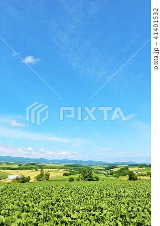 北海道 爽やかな青空と美瑛の大地 41401532