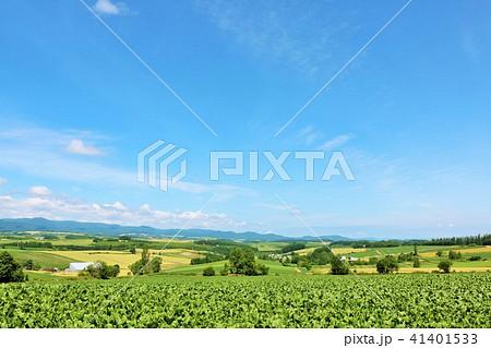 北海道 爽やかな青空と美瑛の大地 41401533