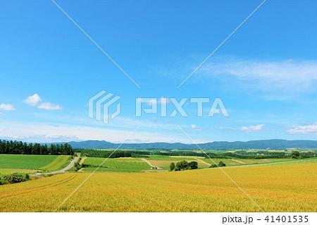 北海道 爽やかな青空と広大な麦畑 41401535