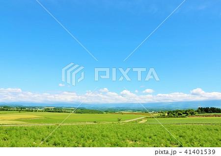 北海道 夏の青空と美瑛の大地 41401539