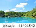 池 湖畔 森の写真 41401542
