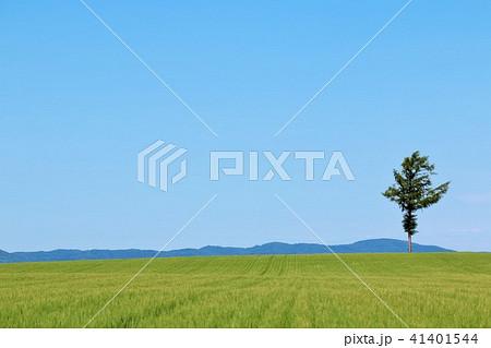 北海道 青空の大地 41401544