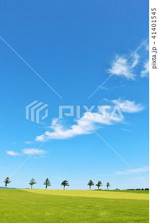 北海道 青空の大地 41401545