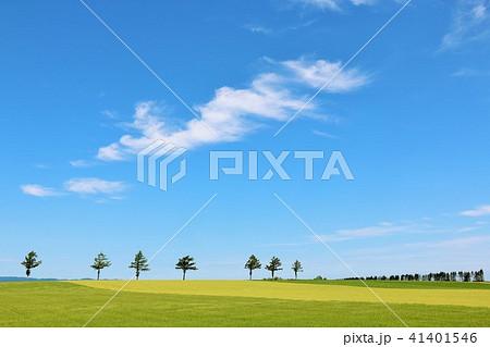 北海道 青空の大地 41401546