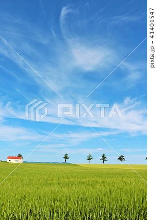 北海道 青空の大地 41401547