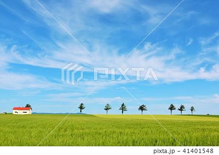 北海道 青空の大地 41401548