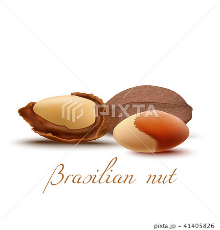 Brasilian Nut and Kernel in Realistic Style 41405826